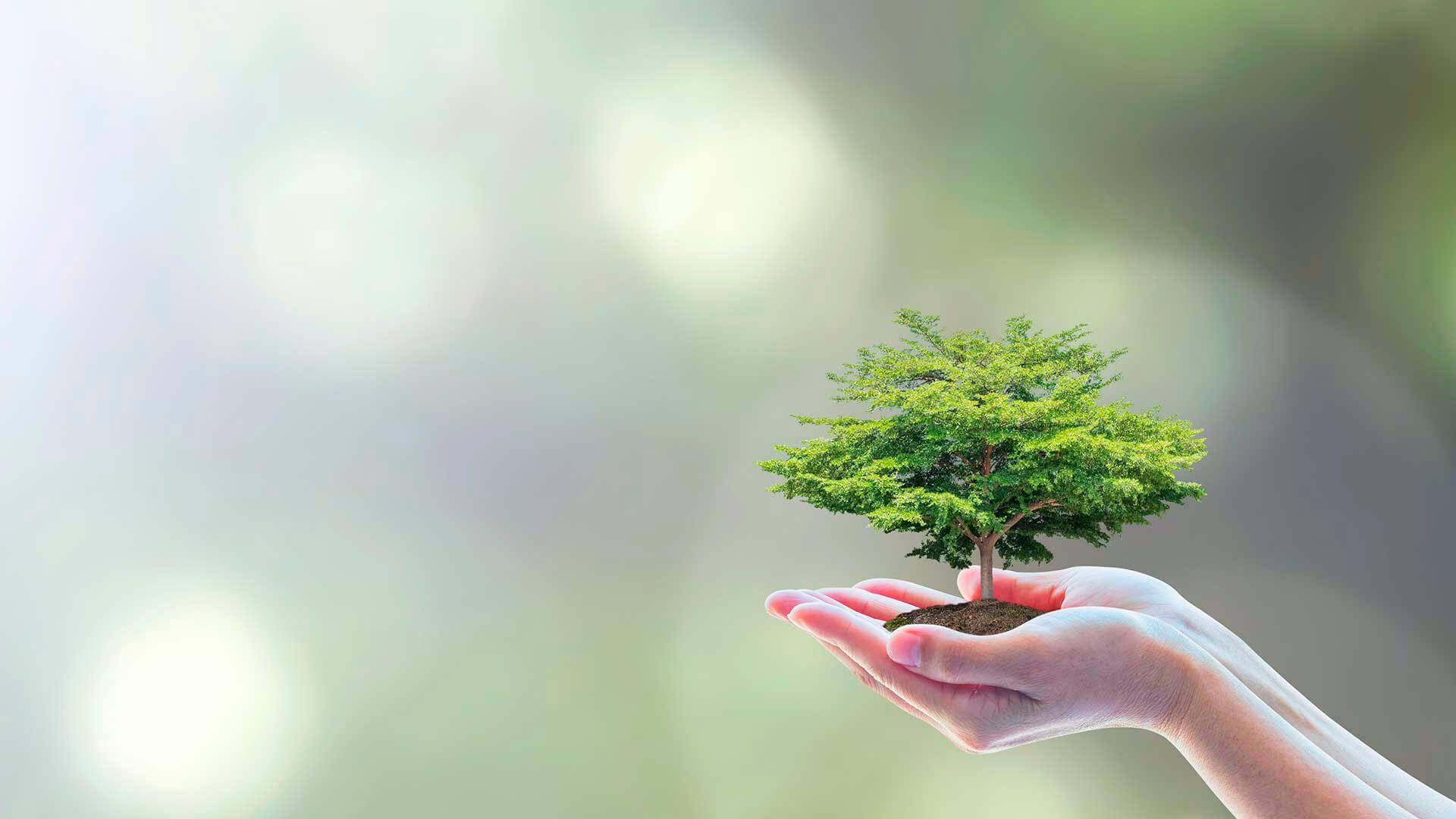 Actividades sostenibles online para empresas y grupos